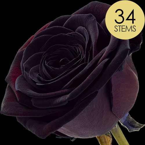 34 Luxury Black Roses