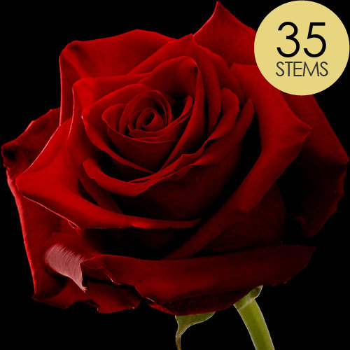 35 Classic Large Headed Red Naomi Roses