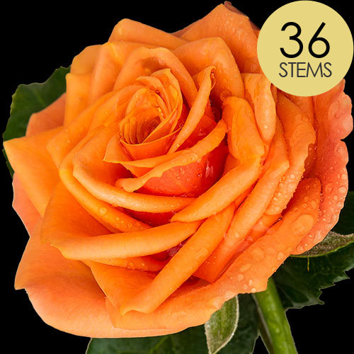 36 Luxury Orange Roses