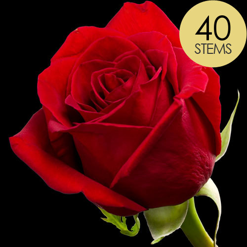 40 Luxury Bright Red Freedom Roses