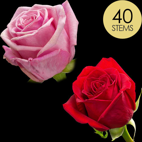 40 Red and Pink Roses