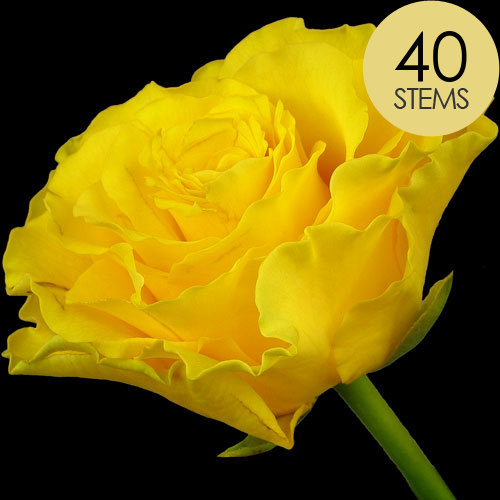 40 Luxury Yellow Roses