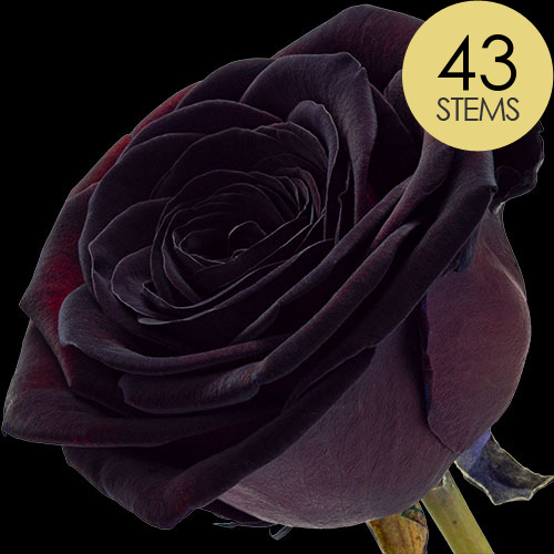 43 Luxury Black Roses
