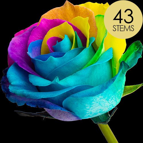 43 Luxury Happy Roses