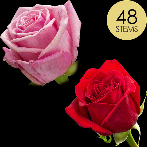 48 Luxury Red and Pink Roses