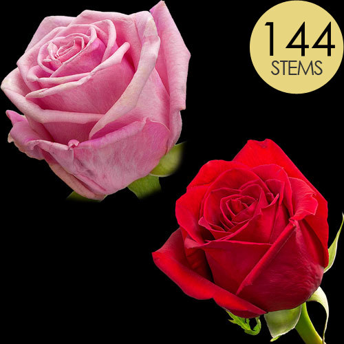 144 Wholesale Red and Pink Roses
