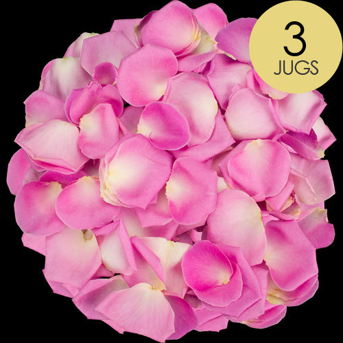 3 Jugs of Pink Rose Petals