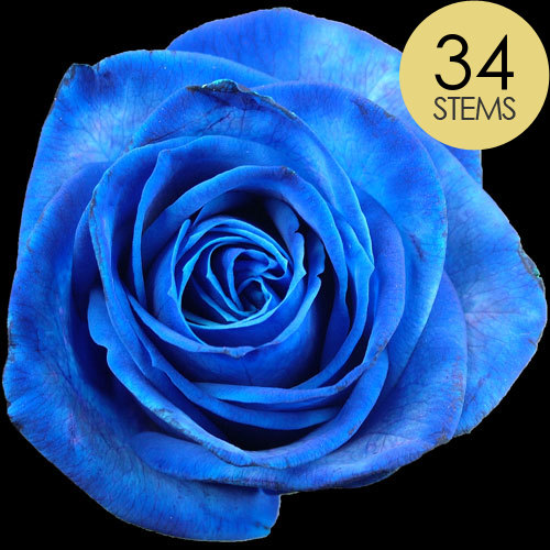 34 Blue Roses