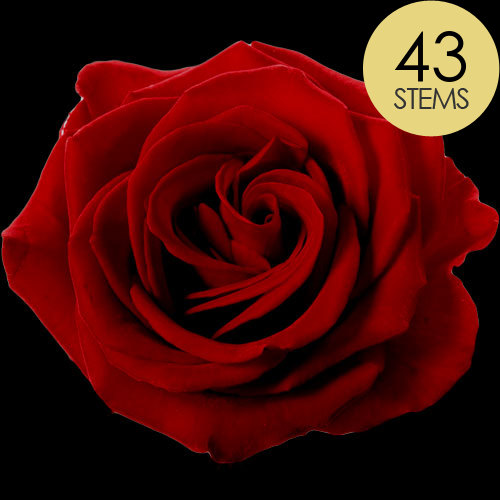 43 Red Roses