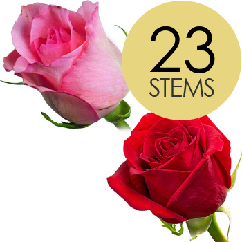 Click to view product details and reviews for 23 Red And Pink Roses.