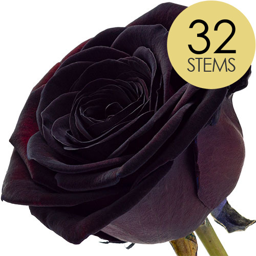 Image of 32 Classic Black Roses