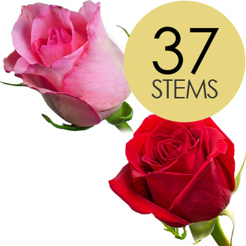 Image of 37 Classic Red and Pink Roses