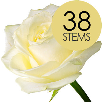 Image of 38 Classic White Roses