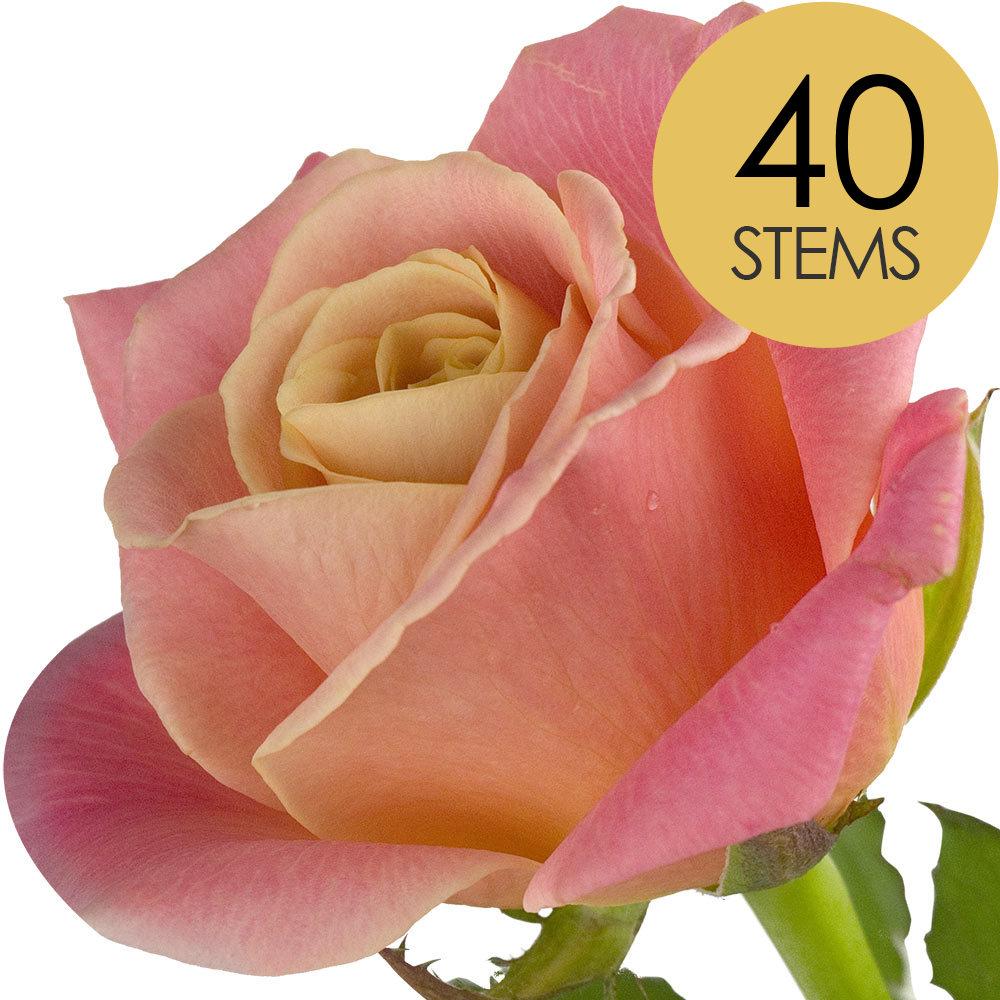 40 Peach Roses