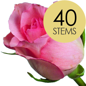 Image of 40 Classic Pink Roses
