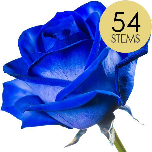 Image of 54 Classic Blue Roses
