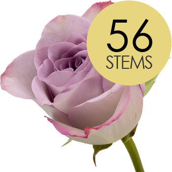 Image of 56 Classic Lilac Roses