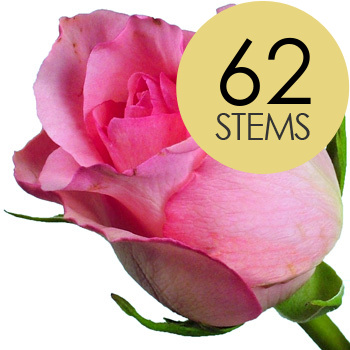 Image of 62 Classic Pink Roses
