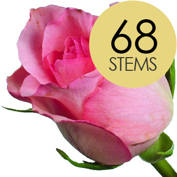 Click to view product details and reviews for 68 Pink Roses.