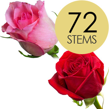 Image of 72 Luxury Red and Pink Roses