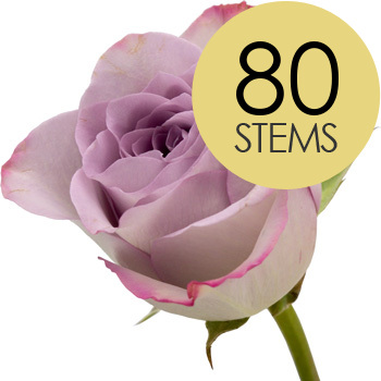 Image of 80 Classic Lilac Roses