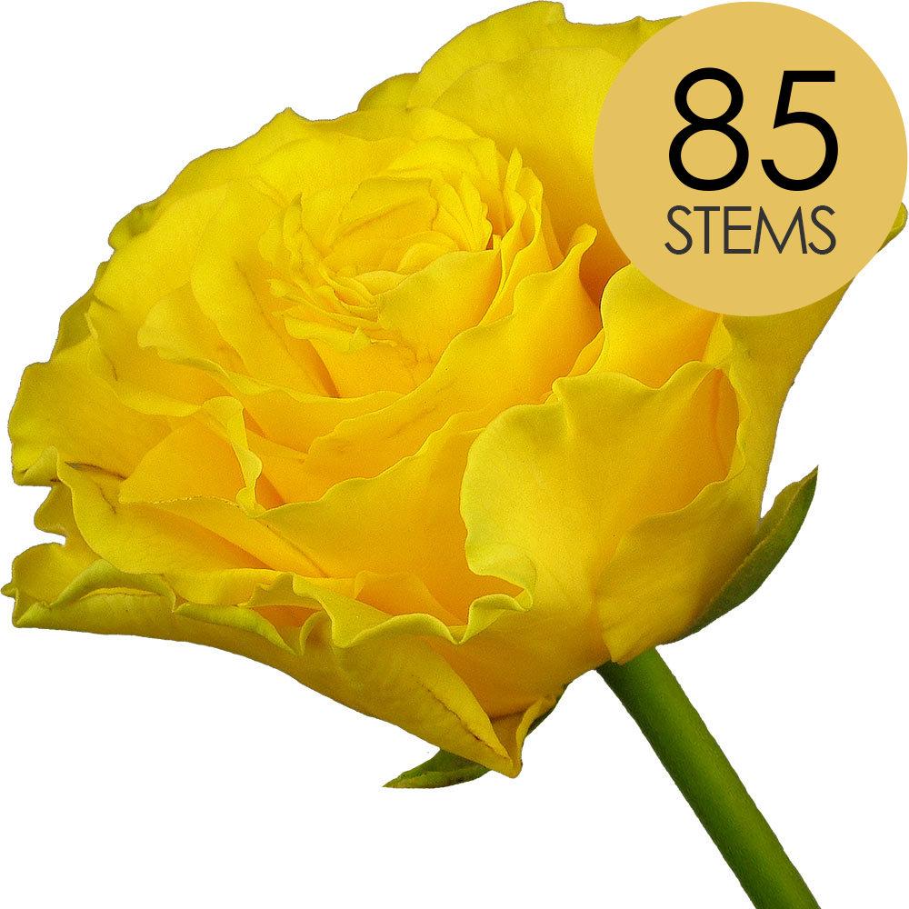 85 Yellow Roses