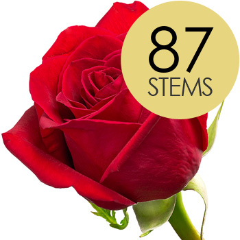 Image of 87 Classic Bright Red Freedom Roses