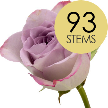 Image of 93 Classic Lilac Roses