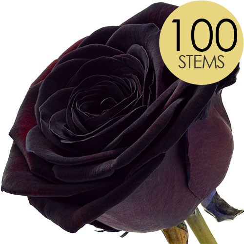 Image of 100 Black Roses