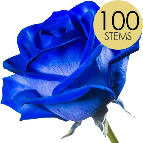 Image of 100 Blue Roses