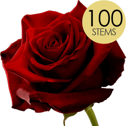 Image of 100 Classic Large Headed Red Naomi Roses