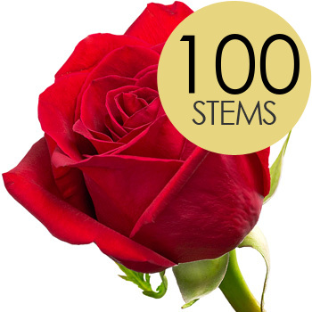 Image of 100 Classic Bright Red Freedom Roses
