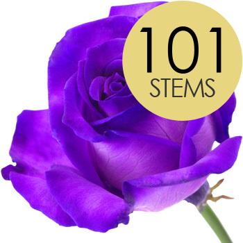 Flowers 101 PURPLE Roses handtied into a Luxury Bouquet