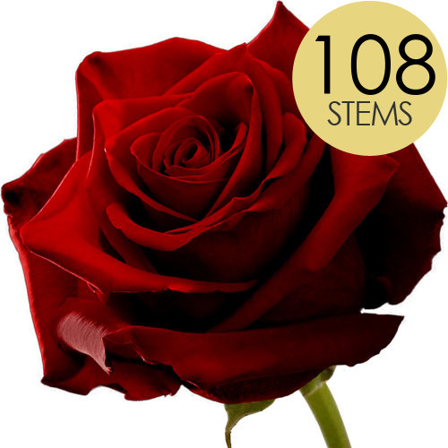 Image of 108 Wholesale Large Headed Red Naomi Roses