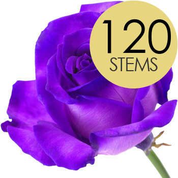 Flowers 120 PURPLE Roses handtied into a Luxury Bouquet