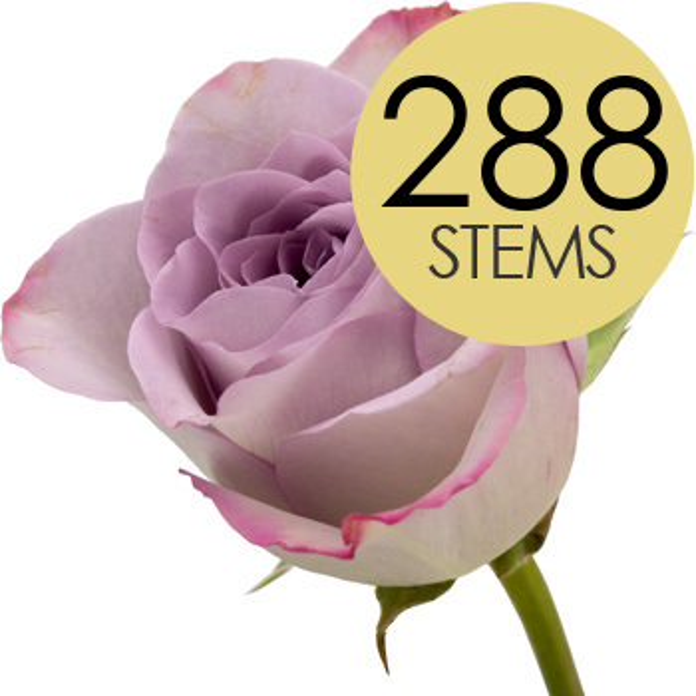 Flowers 288 LILAC Bulk Roses