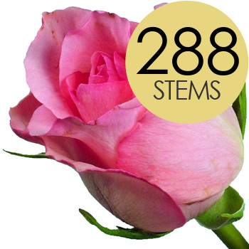 Image of 288 Wholesale Pink Roses