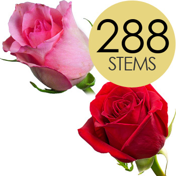 288 Red and Pink Bulk Roses