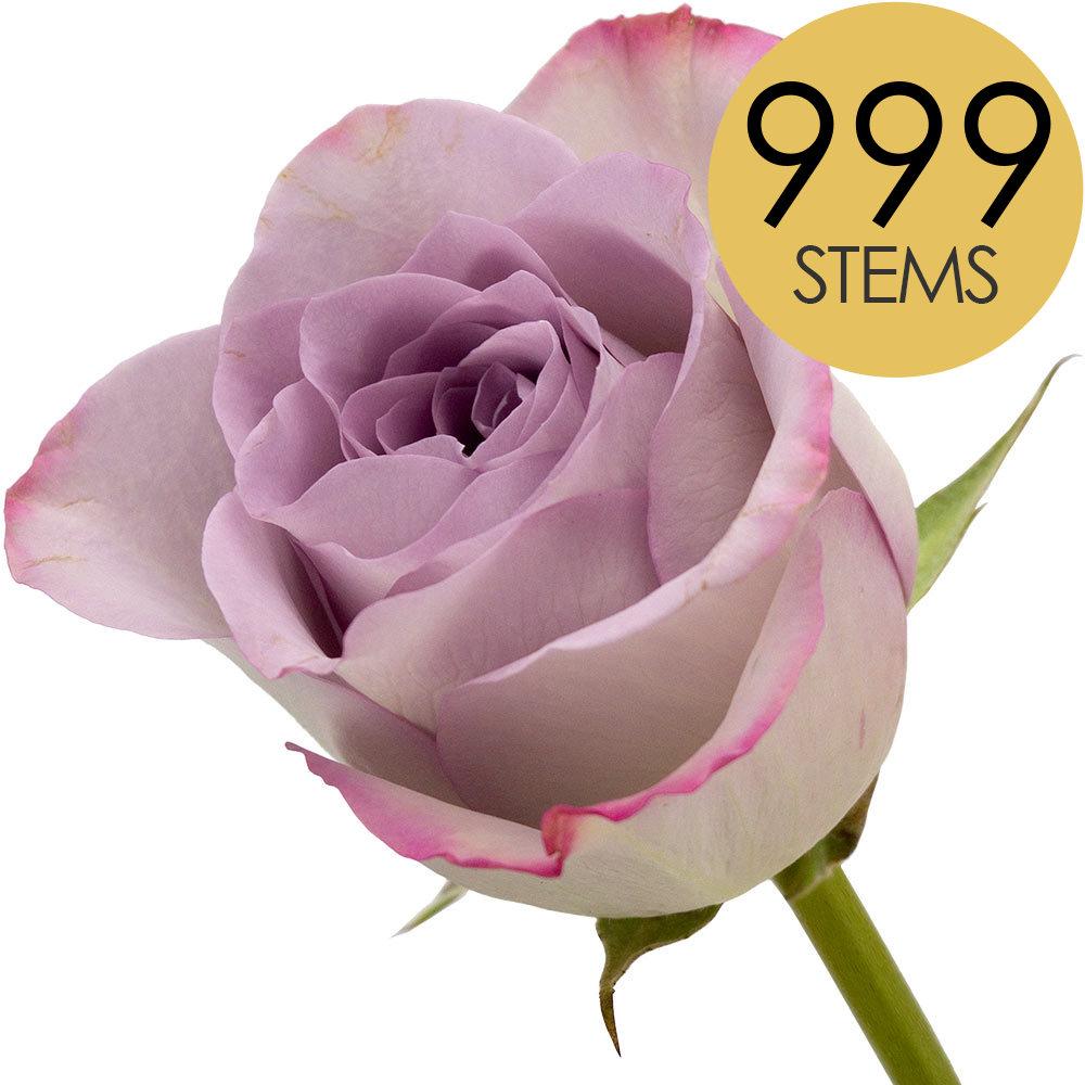 Flowers 999 LILAC Bulk Roses