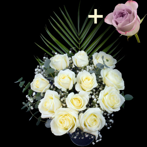 A single Lilac Rose surrounded by 11 White Roses