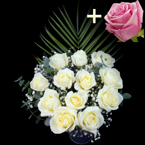 A single Pink Rose surrounded by 11 White Roses