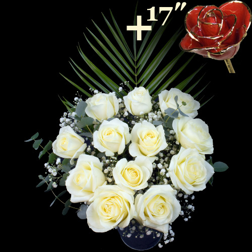 A single 17Inch Gold Trimmed Red Rose surrounded by 11 White Roses