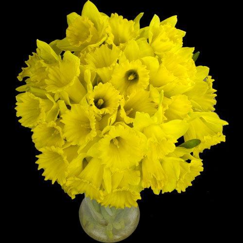 30 Daffodils handtied into Luxury Bouquet
