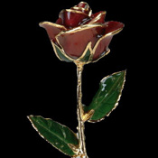 A Burgundy 17Inch 24kt Gold Trimmed Rose