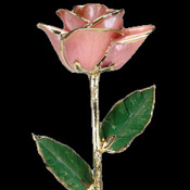 A Pink 17Inch 24kt Gold Trimmed Rose