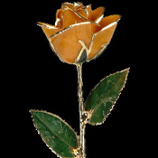 A Peach 17Inch 24kt Gold Trimmed Rose