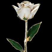 A White 17Inch 24kt Gold Trimmed Rose