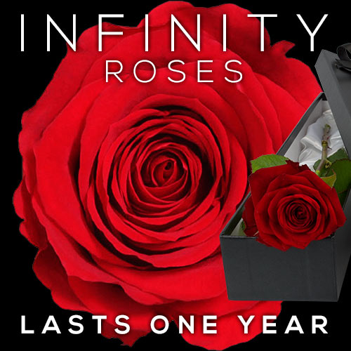 INFINITY Luxury Single RED Rose