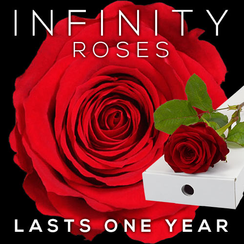 INFINITY Letterbox Single RED Rose