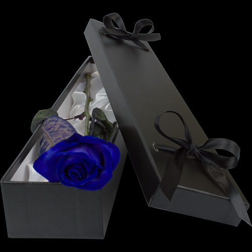 Luxury Blue (Dyed) Rose
